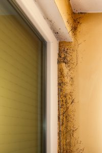 Damp Leads To Mold